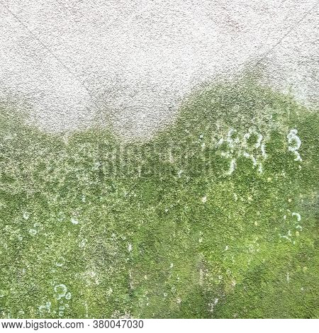 Wall With Mold And Moss. Mold And Green Moss On Dirty Concrete Wall Texture.