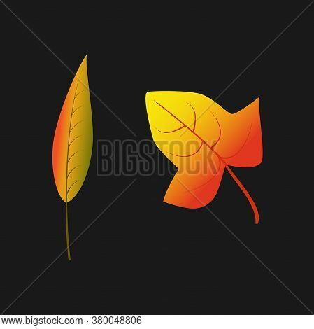 Vector Color Illustration. Autumn Leaves. Abstract Vector Illustration Banner. Autumn Nature. Light