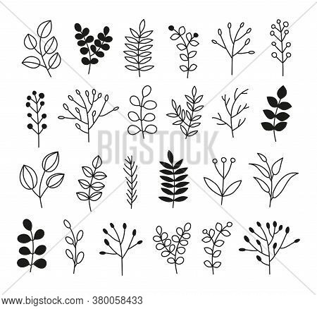 Set Of Simple Doodle Black And Outline Leafy Twigs, Wild Herbs, Plants, Berries Isolated On White Ba