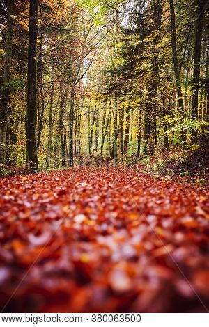 Forest Path Background In Autumn Or Fall Season With Red Foliage, Broadleaf Woodland