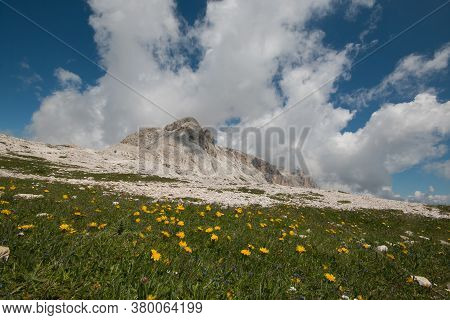 Wild Flowers In The Plateau Of Pale On Summer Day, Trentino, Italy