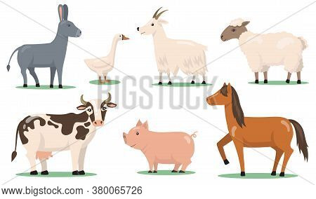 Various Animals And Pets On Farm Flat Clipart Set. Cartoon Characters Of Horse, Sheep, Pig, Goat, Go