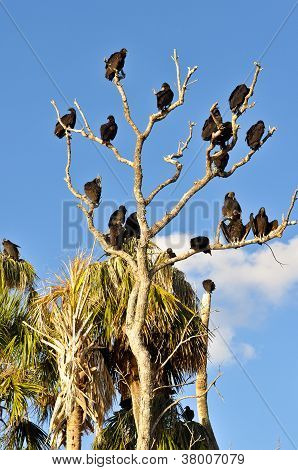 Tree Of Vultures