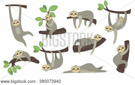 Cute Sleepy Sloth On Branch Flat Icon Set. Cartoon Character Of Little Sloth Hanging, Sleeping, Lyin