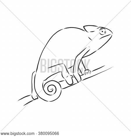 Sketch Of Chameleon. Hand Drawn Vector Illustration.chameleon Animal, Vector Sketch Illustration