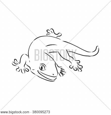 Vector Hand Drawn Doodle Sketch Gecko Lizard Isolated On White Background. Gecko Animal, Vector Sket