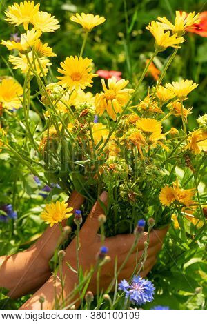 Yellow And Blue Wildflowers In The Hands Of A Girl