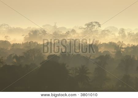 Tropical Rain Forest In PerU At Sunrise