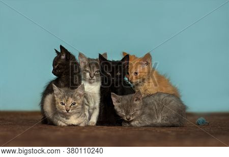 Group Of Different Six Kittens On The Floor