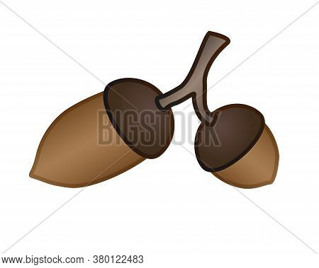 Two Acorns On A Branch - Vector Full Color Illustration. Large And Small Brown Acorns On An Oak Bran