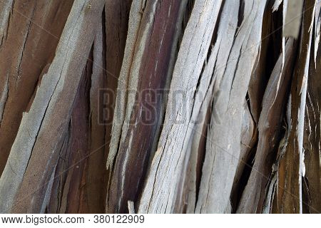 The Bark Of A Young Coastal Redwood, Sequoia Sempervirens, With Vertical Pattern, Brown And Grey Col