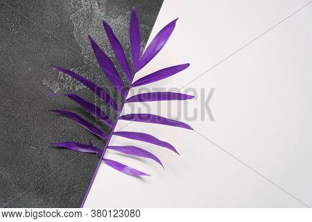 Plant leaf on dark concrete and white paper background. Flat lay, top view, minimal design template with copyspace.