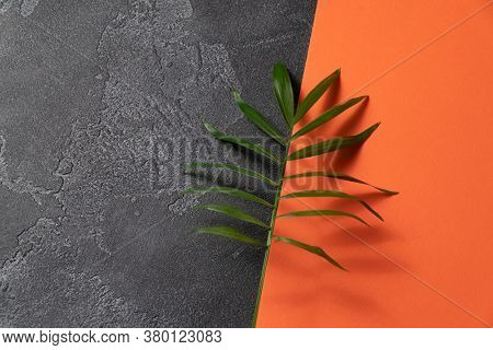 Green plant leaf on dark concrete and orange paper background. Flat lay, top view, minimal design, business card template with copyspace.