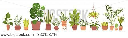 House Plants Home Decor Vector Illustration Set. Cartoon Potted Green Plants Flowers Collection, Hou