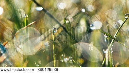 Fresh blurred green spring grass with water drops. 4k shot for background.
