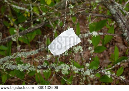 Medical Mask Stuck In A Branch, The End Of The Epidemic, Pandemic.
