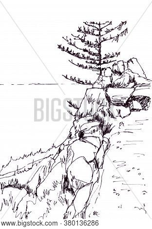 Larch On The Steep Shore Of Lake Baikal, Graphic Black And White Drawing, Travel Sketch
