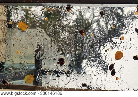 Fallen Autumn Yellow Leaves On The Wet Glass Ceiling