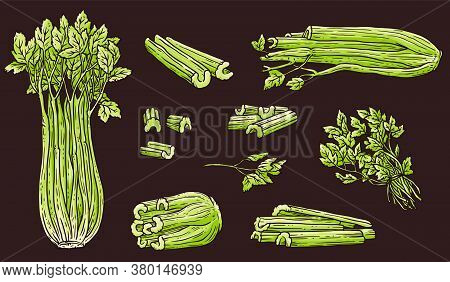 Celery Drawing Set - Green Whole And Chopped Vegetable And Leaves Collection