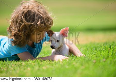 Little Boy Sitting On The Grass With Cute Puppy Dog. Close Up, Copy Space. Kid And White Puppy Outdo
