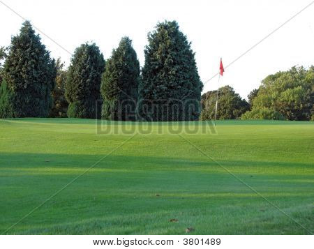 Conifers And The Golf Course