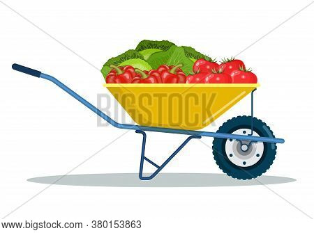 Garden Cart With Cabbage, Peppers, Tomatoes. Organic Farm Products. Metal Wheelbarrow Full Of Ripe V