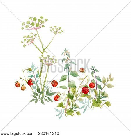 Beautiful Floral Composition With Watercolor Field Flowers And Berries. Stock Illuistration.