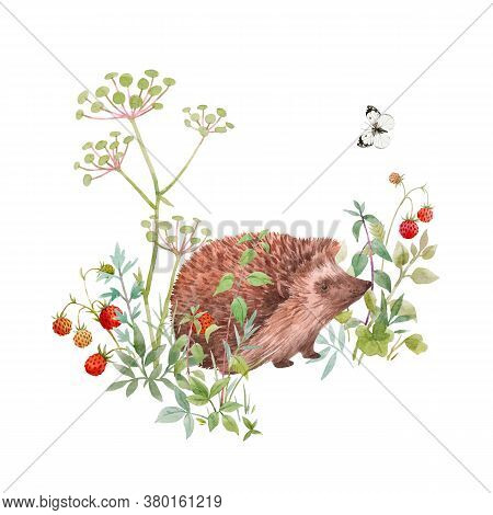 Beautiful Floral Composition With Watercolor Cute Hedgehog Field Flowers And Berries. Stock Illuistr
