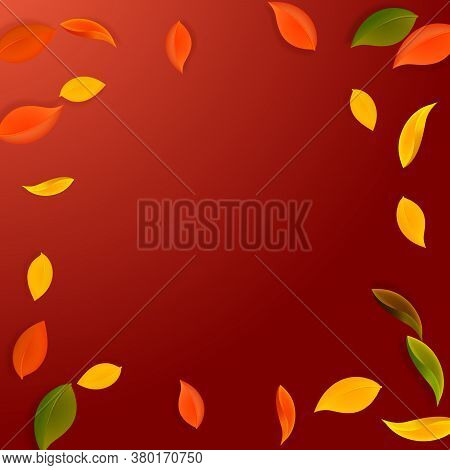 Falling Autumn Leaves. Red, Yellow, Green, Brown Neat Leaves Flying. Vignette Colorful Foliage On Fa