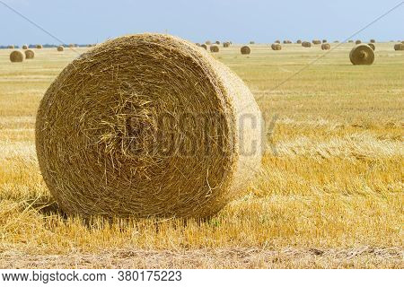 Large Round Straw Bale Of A Barley On Harvested Agricultural Field, Close-up Against The Other Same