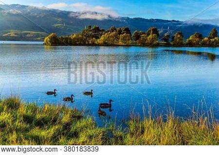 Scenic Spots of New Zealand. Huge quiet lake on the way to Queenstown. Flock of wild ducks swims in smooth, calm water. Early morning. The concept of active, ecological and photo tourism