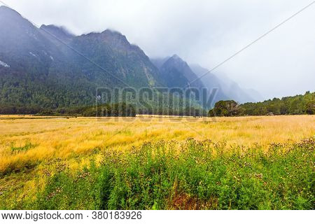 Dirt road to Milford Sound - sea fjord of glacial origin. Fields with yellow grass are surrounded by mountainsides in the fogs. South Island of New Zealand. Proximity to the Antarctica