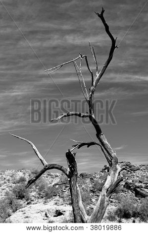 Dead Tree Black and White