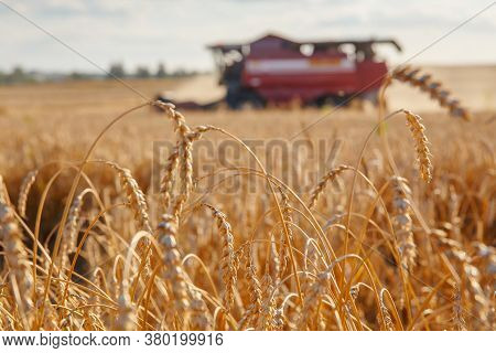 Combine Harvester Removes Wheat In The Field. Bread Production.