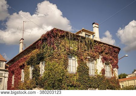 House Full Of Climber Plants In Coimbra, Portugal.