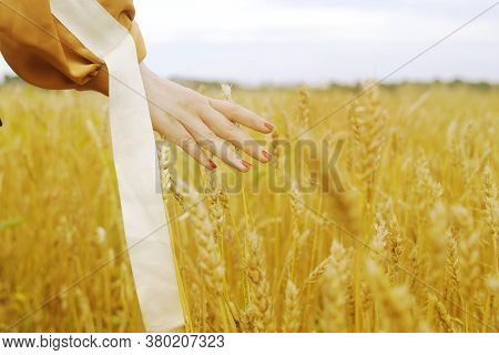 Hand Touches The Cereal. Concept Of Protection And Care For Grain. Shallow Depth Of  Golden Field. G