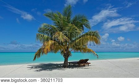 Beach And Lonely Palm Tree On White Sand. Two Sun Loungers In The Shade. Calm Aquamarine Ocean, Pict