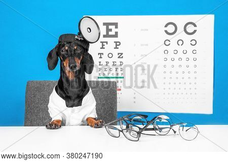 Cute Dachshund Dog Ophthalmologist In Doctor Uniform With Robe And Head Mirror, Glasses For Vision C