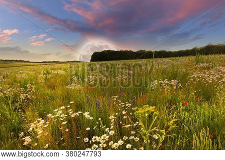 Mega Moon Rising Over Beautiful Rural Flower Meadow Landscape In Spring Time, With Pink Sunset Dusk