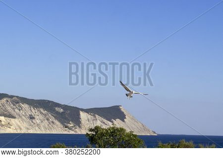 Seagull Flying In The Sky. Seagull Against  Sea And Rocks.