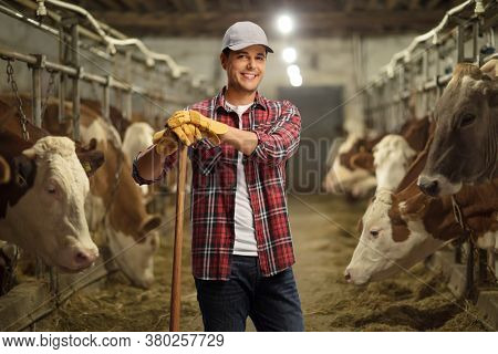 Young male worker posing on a cow dairy farm inside a cowshed