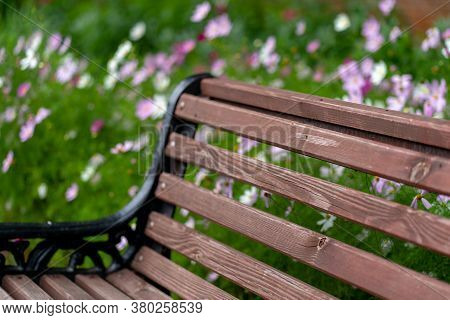 Close Up Of Wooden Bench For Rest In Park. New Pew Near Flowers In Parkland.