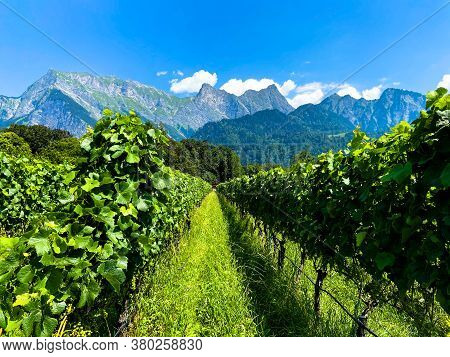 A Winery In Front Of An Alpine Massif In Maienfeld On A Sunny Day