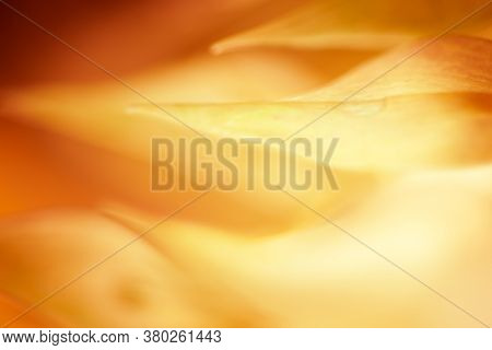 Autumn blurred nature background. Silhouettes of plants against sunset background. Autumn concept