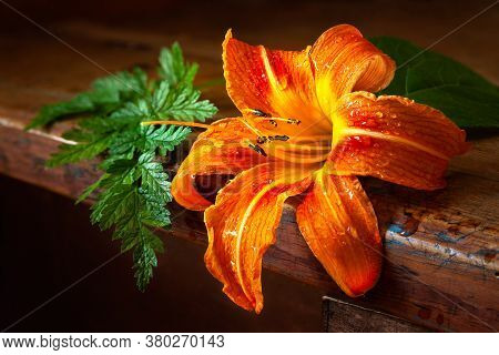 Daylily On A Wooden Table. Orange Daylily On A Dark Background. Still Life With Flowers In A Rustic