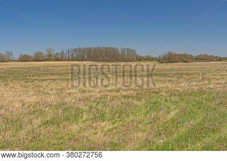 Tallgrass Prairie In Early Spring In Midewin National Tallgrass Prairie In Wilmington, Illinois