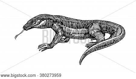 Komodo Lizard, Dangerous Predator, Dragon, For Logo Or Emblem, Engraving, Sketch, Vector Illustratio