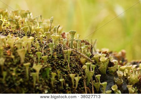 Forest floor closeup at autumn. Small plants growing. poster