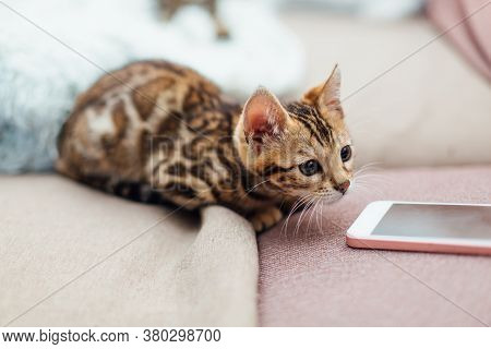 Cute Bengal Kitten Siiting And Playing On The Couch Next To Mobile Phone.