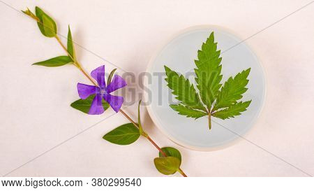 Skin Care Cosmetics With Marijuana, Beauty. Purifying Body Scrub With Cannabis Leaf And A Sprig Of W